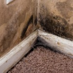 mold 000018979752small