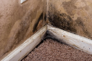 Water Intrusion Can Cause Mold