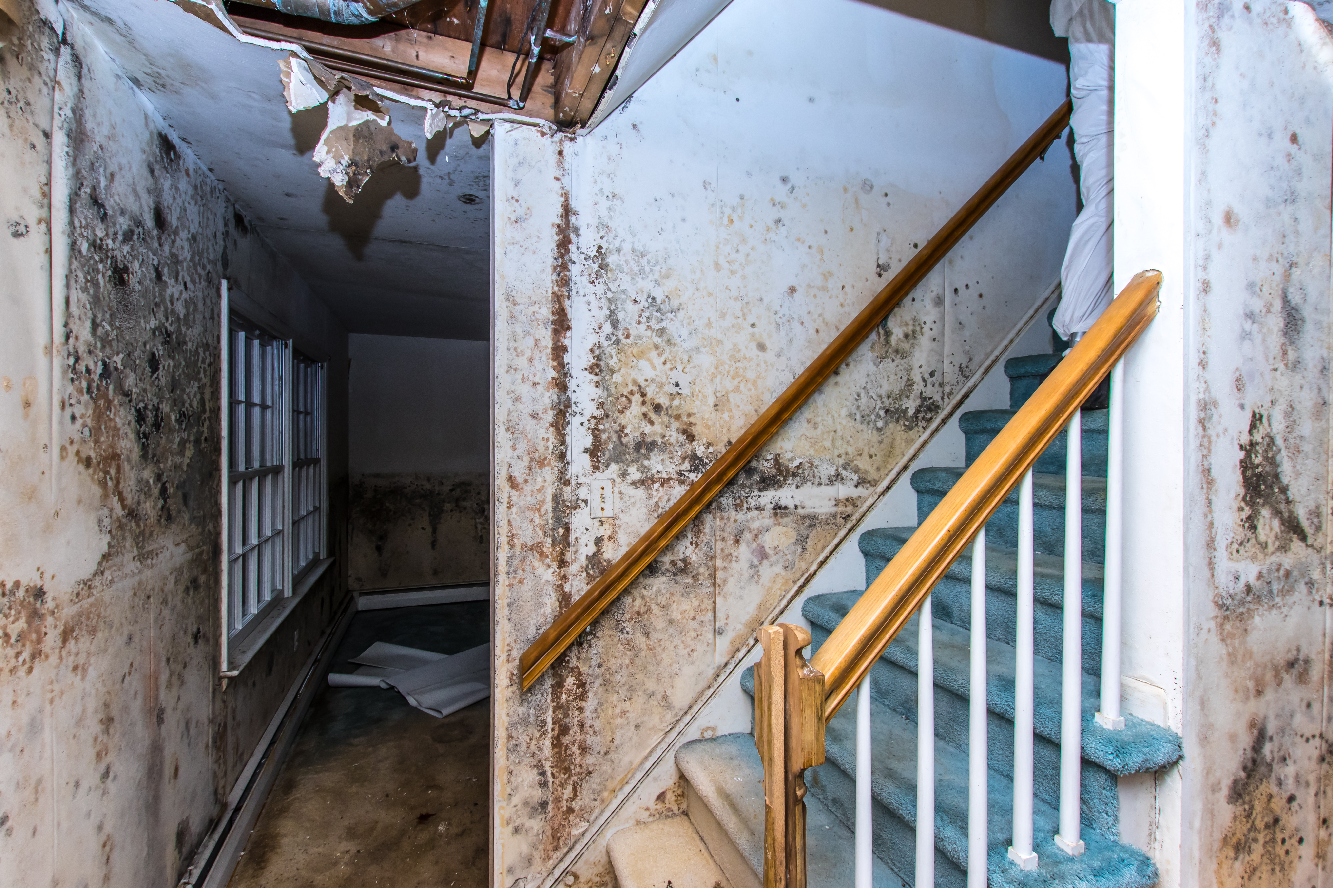 Three Common Causes Of Toxic Building Mold