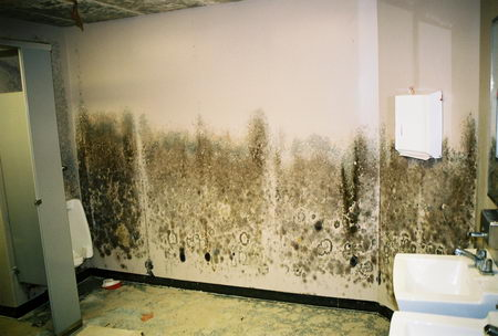 mold experts