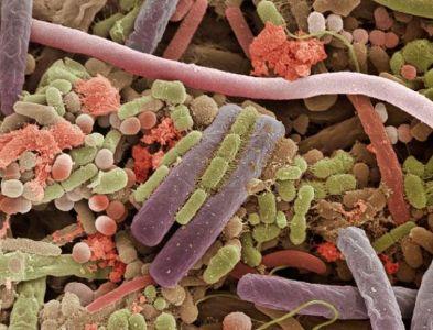 b2ap3_thumbnail_Tounge-Bacteria.jpg